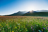 'Dawn over meadow with flowers with the sun coming up behind the hills of the Black Cuillin; Isle of Skye, Scotland'