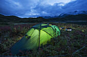 Tent glows at dusk at camp site surrounded by bear protection fence near Kinak Bay along Katmai Coast, Katmai National Park, Southwest Alaska