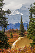 A partial view of Mt. McKinley with a yellow tent in the foreground in fall foliage, Denali National Park, Interior Alaska, USA.
