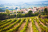 'Winemaking in the largest wine region of Catalonia, the Penedes; Barcelona, Spain'