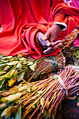 'Qat sellers in a market just outside the old city of Harar in Eastern Ethiopia; Harar, Ethiopia'
