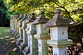 'Buddhist structures in a row under a tree; Japan'