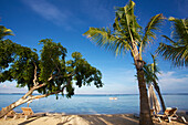 'Palm trees on the white sand shore with a boat in the Indian Ocean; Mauritius'