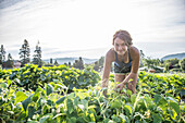 Kelsey McGill harvests green beans from an organic urban farm.