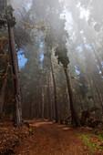 Hawaii, Maui, Poli Poli, A misty fog rolls in along tree lined dirt road