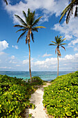 'A sandy path towards the caribbean sea; Nesbit Beach, Nevis'