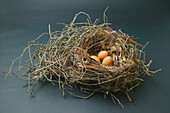 'Three eggs in a bird's nest; Santa Barbara, California, United States of America'