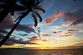'Silhouette of palm trees at sunset at Keawekapu Beach; Kihei, Maui, Hawaii, United States of America'