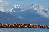 Sea lions bask in the sun on a small island in Lynn Canal, Inside Passage, Coast Range beyond, Alaska, near Juneau.