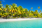 'Tropical sunny island with palm trees and blue ocean, Tikehau, French Polynesia'