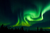 'The bright neon green aurora swirling above the boreal forest, Chena River State Recreation Area; Fairbanks, Alaska, United States of America'
