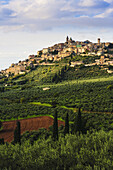 'City on a hilltop with fields of crops below; Trevi, Umbria, Italy'
