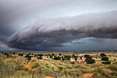 Storm clouds threaten the Kalahari, Kgalagadi Transfrontier Park in summer, Northern Cape, South Africa, Africa