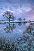 Frosty winter morning beside a rural pond, Morchard Road, Devon, England, United Kingdom, Europe
