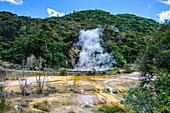 Smoking geothermal acitve field in the Waimangu Volcanic Valley, North Island, New Zealand, Pacific