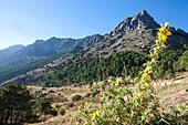 Sierra del Pinar Mountains in the natural preserve of Sierra de Grazalema, Cadiz Province, Andalusia, Spain, Europe