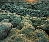 Moss on a lava field near Kirkjubaerklaustur, Eldhraun, South Island, Island