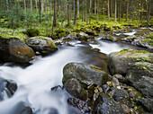Rio San Pellegrino flowing through a wood, Alto Adige, South Tyrol, Dolomites, Italy