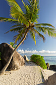 Palm tree on the beach, Anse Source d'Argent, La Digue Island, Seychelles
