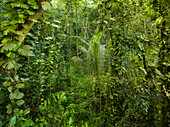 Vegetation in the Jungle, La Digue Island, La Digue Island, Seychelles
