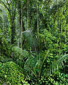 Trees and vegetation in the jungle, La Digue Island, Seychelles