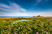 Dwelling mound, Hallig Langeness, North Frisian Islands, Schleswig-Holstein, Germany