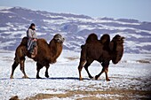Mongolian nomad riding on a camel in the Gobi desert in the wintertime, Mongolia