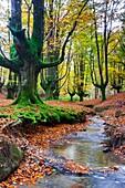 Otzarreta beechwood. Gorbeia Natural Park. Biscay, Basque Country, Spain, Europe.