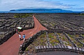 Landscape of the Pico Island Vineyard Culture has been classified by UNESCO as a World Heritage Site since 2004, Pico Island, Azores Archipelago, Portugal, Europe.