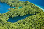 Luftaufnahme Quallensee von Palau, Mikronesien, Palau, Aerial View of Jellyfish Lake of Palau, Micronesia, Palau