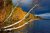 Dolby Pond, USA, Amerika, Vereinigte Staaten, Maine, See, Seeufer, Wald, Verfärbung, Indian Summer, Herbst, Morgenstimmung, Wolk