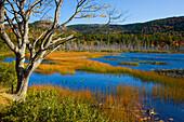 Upper Hadlock Pond, USA, Amerika, Vereinigte Staaten, Maine, Acadia Nationalpark, See, Seeufer, Baum, Verlandung, Binsen, Herbst