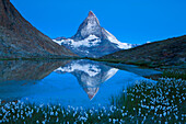 Lake Riffel, Switzerland, Europe, canton Valais, Mattertal, lake, sea, lake shore, grass, cotton grasses, mountain, Matterhorn, reflection, daybreak