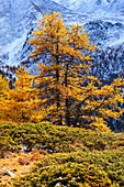Alps, cutting, part, tree, mountain, mountains, flora, trees, flora, mountains, autumn, autumn colors, autumn wood, Indian summe