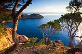 Aigua_xellida, Spain, Europe, Catalonia, Costa Brava, sea, Mediterranean Sea, coast, rock coast, morning light, trees, pines