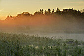 A beaver pond in late summer at dawn, Greater Sudbury, Ontario, Canada.