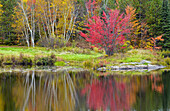Autumn colour in a birch, aspen, maple mixed hardwood woodland reflected in St. Pothier Lake, Greater Sudbury Walden, Ontario, Canada.