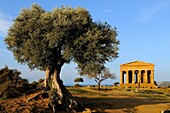 Italy, Sicily, Agrigento, World Heritage Site, Valley of Temples, Tempio della Concordia Temple of Concord