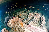 Underwater photography of a sunken ship wreck carrying a cargo of motorcycles  Ras Mohammed National Park, Red Sea, Sinai, Egypt,