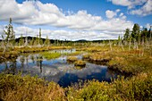 Wetlands near raguette Lake in the Adirondack Mountains of New York State