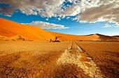 Hidden Vlei, after rain, Namib-Naukluft National park, Namib desert, Namibia