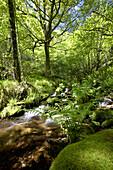 Muniellos nature reserve. Asturias, Spain.