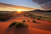 Landscape photo of a colourful sunrise over a green desert landscape after plentiful rains. Namib Rand, Namibia.
