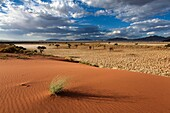 Landscape view of afternoon sunlight below stormy skies in a desert landscape. Namib Rand, Namibia.