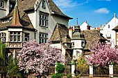 Lycée des Pontonniers, International high school and blossoming trees, Strasbourg, Alsace, France