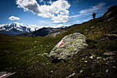 Hiker walking on mountain meadow, Ortler (3905 m) in the background, Monte die Glorenza (2395 m), Vinschgau, South Tyrol, Italy