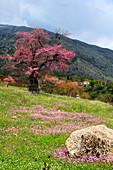 Albania, Balkans, Central Europe, Eastern Europe, European, Southern Europe, travel destinations, Landscape, nature, Stegopull, district Gjirokaster, Tree, forest, trees