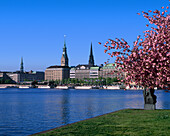 Hamburg, Germany, lake, Binnenalster, Inner Alster, city, spring, cherry blossom, blossom, church, spires, EU, Europe, European, nobody