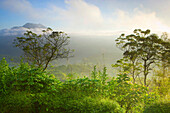 Batur, Indonesia, Asia, Bali, mountain, volcano, volcanism, geology, primeval forest, jungle, rain forest, nature, trees, fogs, morning mood
