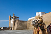 world heritage, Ark, Fortress, Bukhara, City, Uzbekistan, Central Asia, Asia, West, Gate, architecture, camel, city, colourful, history, touristic, travel, unesco